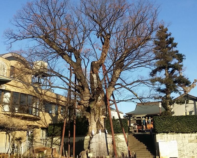 ◆練馬白山神社◆パワースポット&吉方位◆