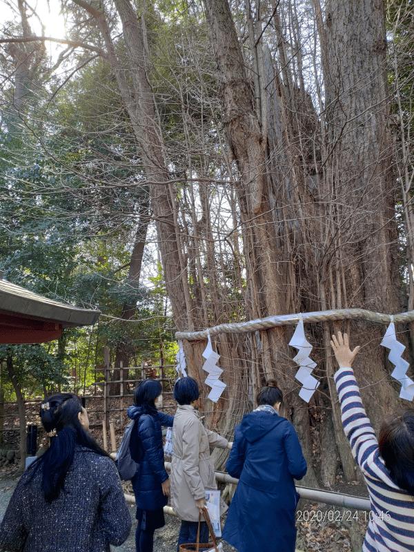 大國魂神社の御神木